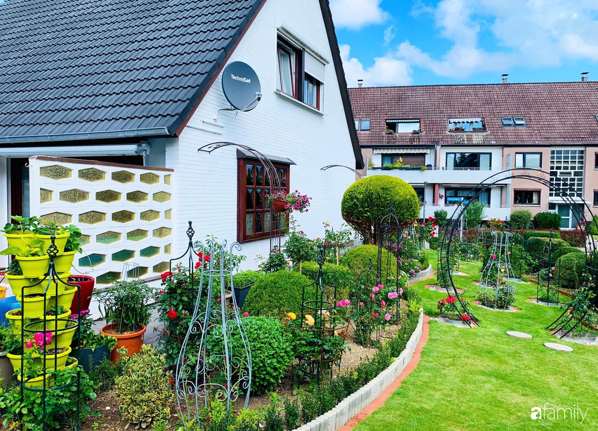 """Vườn hoa 500m² đẹp như cổ tích được tạo bởi tình yêu thiên nhiên của cặp vợ chồng dành cả """"thanh xuân"""" để trồng cây - Ảnh 12."""