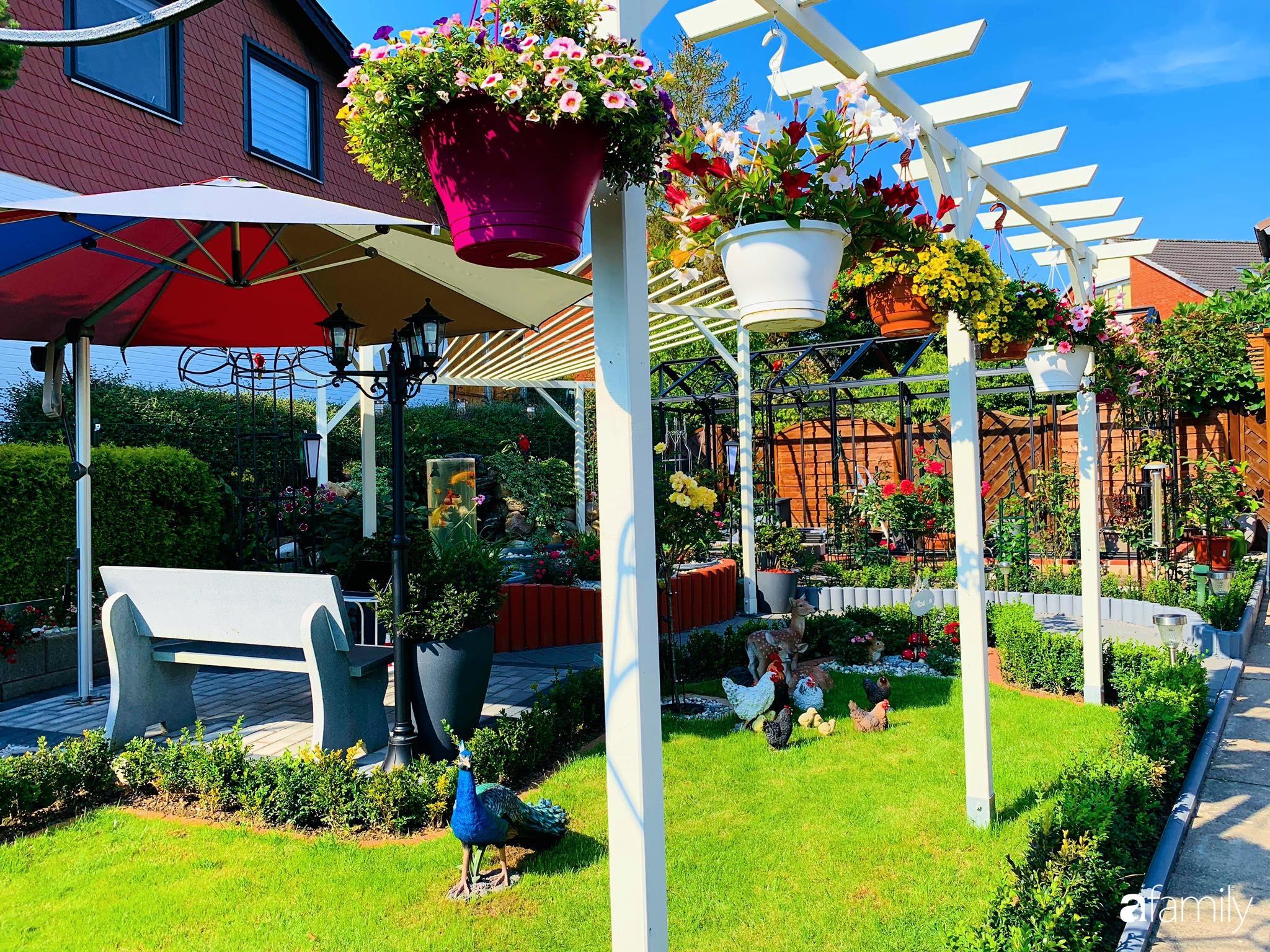 """Vườn hoa 500m² đẹp như cổ tích được tạo bởi tình yêu thiên nhiên của cặp vợ chồng dành cả """"thanh xuân"""" để trồng cây - Ảnh 3."""