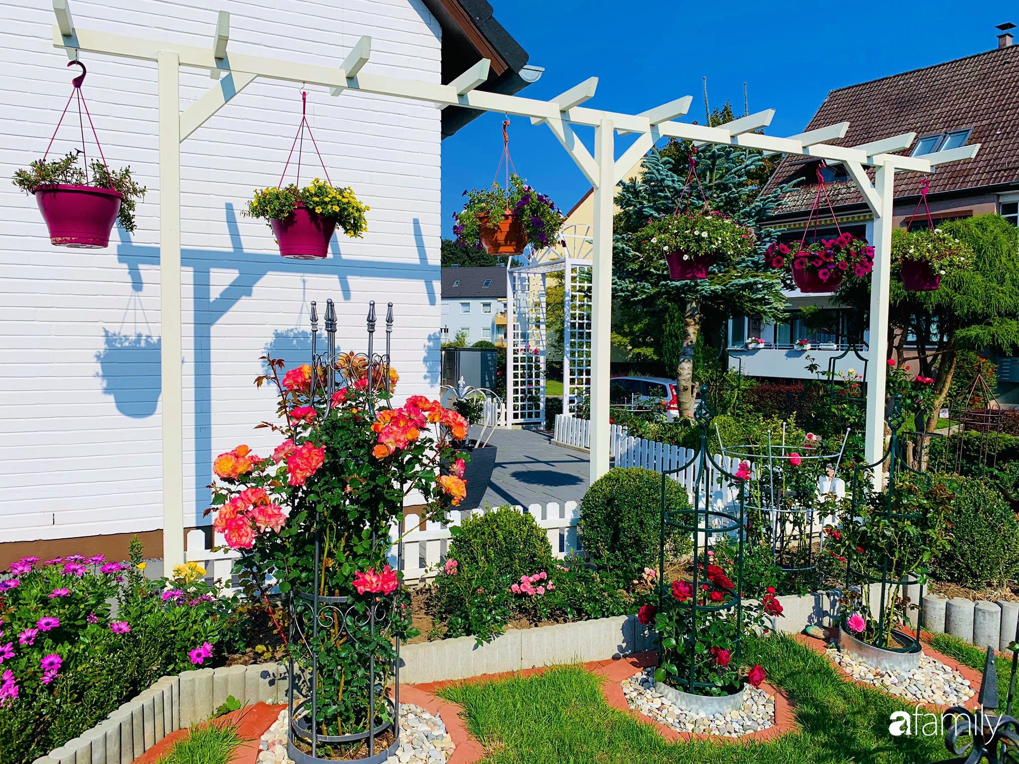 """Vườn hoa 500m² đẹp như cổ tích được tạo bởi tình yêu thiên nhiên của cặp vợ chồng dành cả """"thanh xuân"""" để trồng cây - Ảnh 9."""