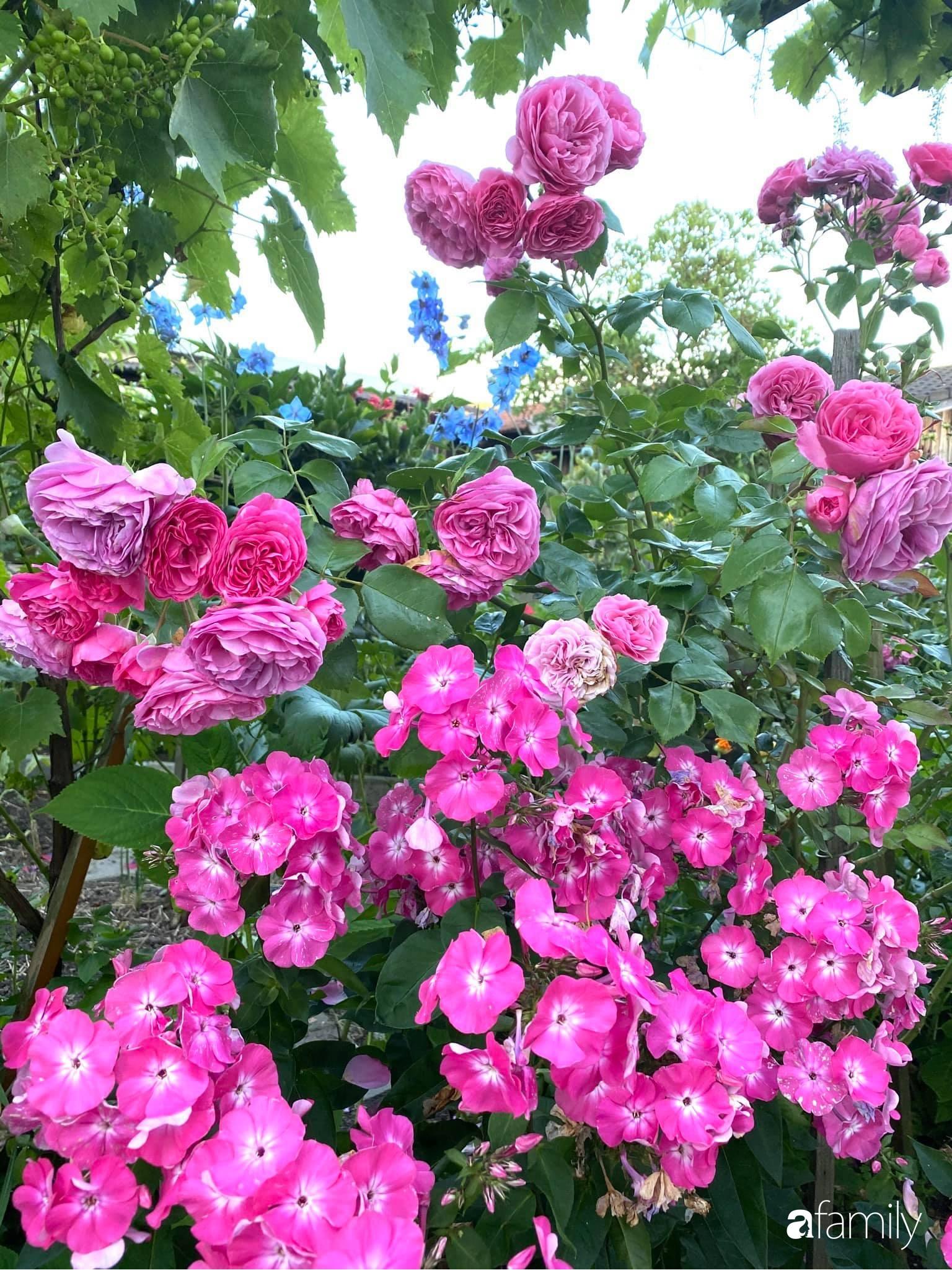 Khu vườn 200m² quanh năm xanh tươi với đủ loại rau quả sạch của mẹ Việt ở Đức - Ảnh 22.
