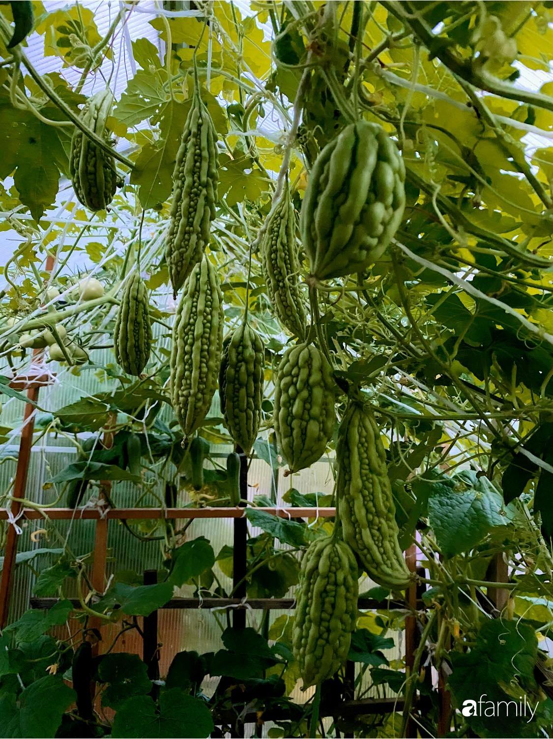 Khu vườn 200m² quanh năm xanh tươi với đủ loại rau quả sạch của mẹ Việt ở Đức - Ảnh 5.