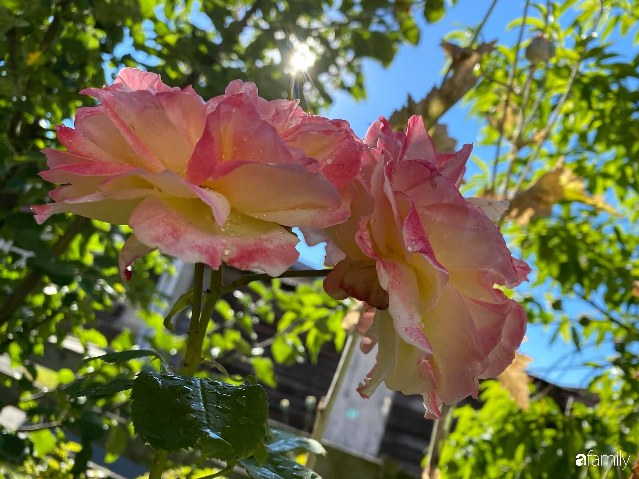 Khu vườn 200m² quanh năm xanh tươi với đủ loại rau quả sạch của mẹ Việt ở Đức - Ảnh 3.