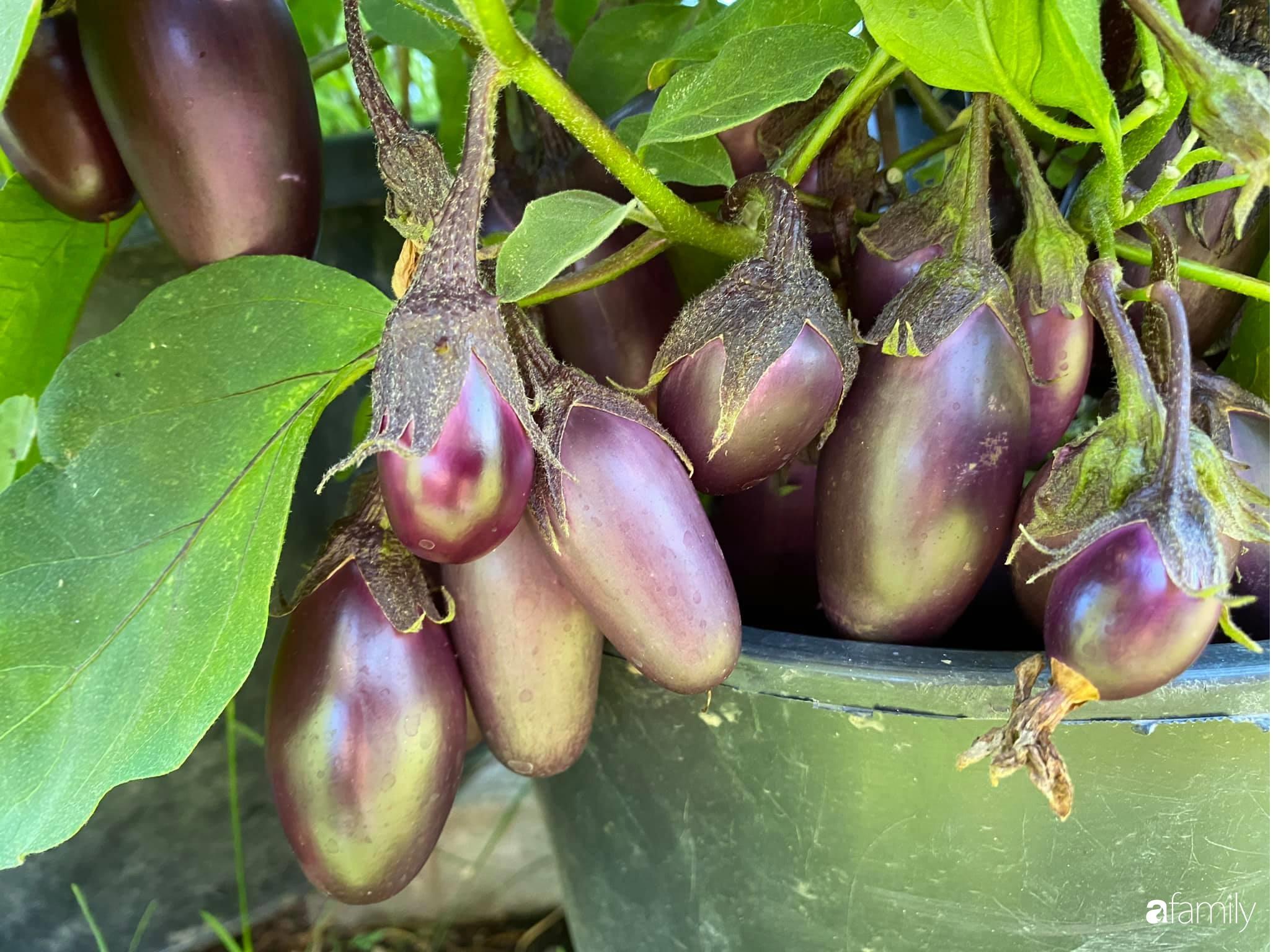 Khu vườn 200m² quanh năm xanh tươi với đủ loại rau quả sạch của mẹ Việt ở Đức - Ảnh 18.