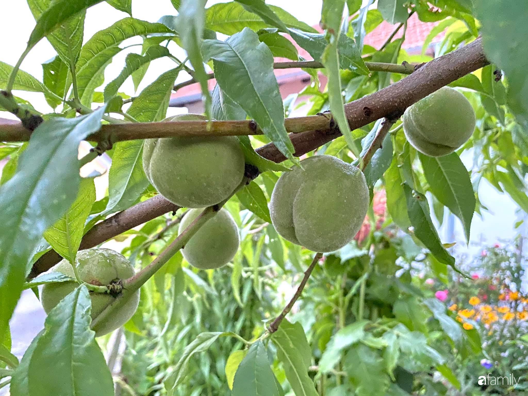 Khu vườn 200m² quanh năm xanh tươi với đủ loại rau quả sạch của mẹ Việt ở Đức - Ảnh 19.