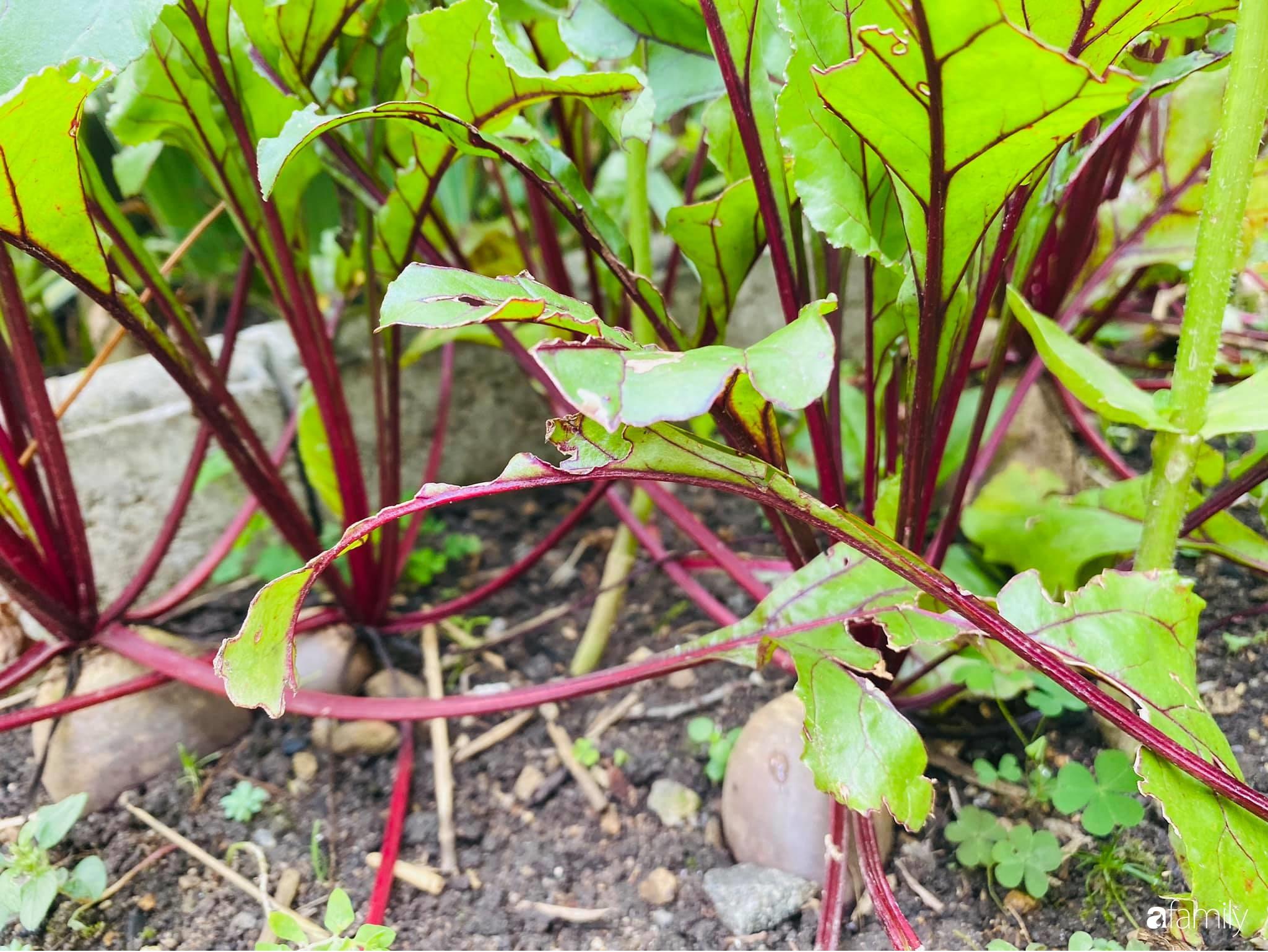 Khu vườn 200m² quanh năm xanh tươi với đủ loại rau quả sạch của mẹ Việt ở Đức - Ảnh 2.