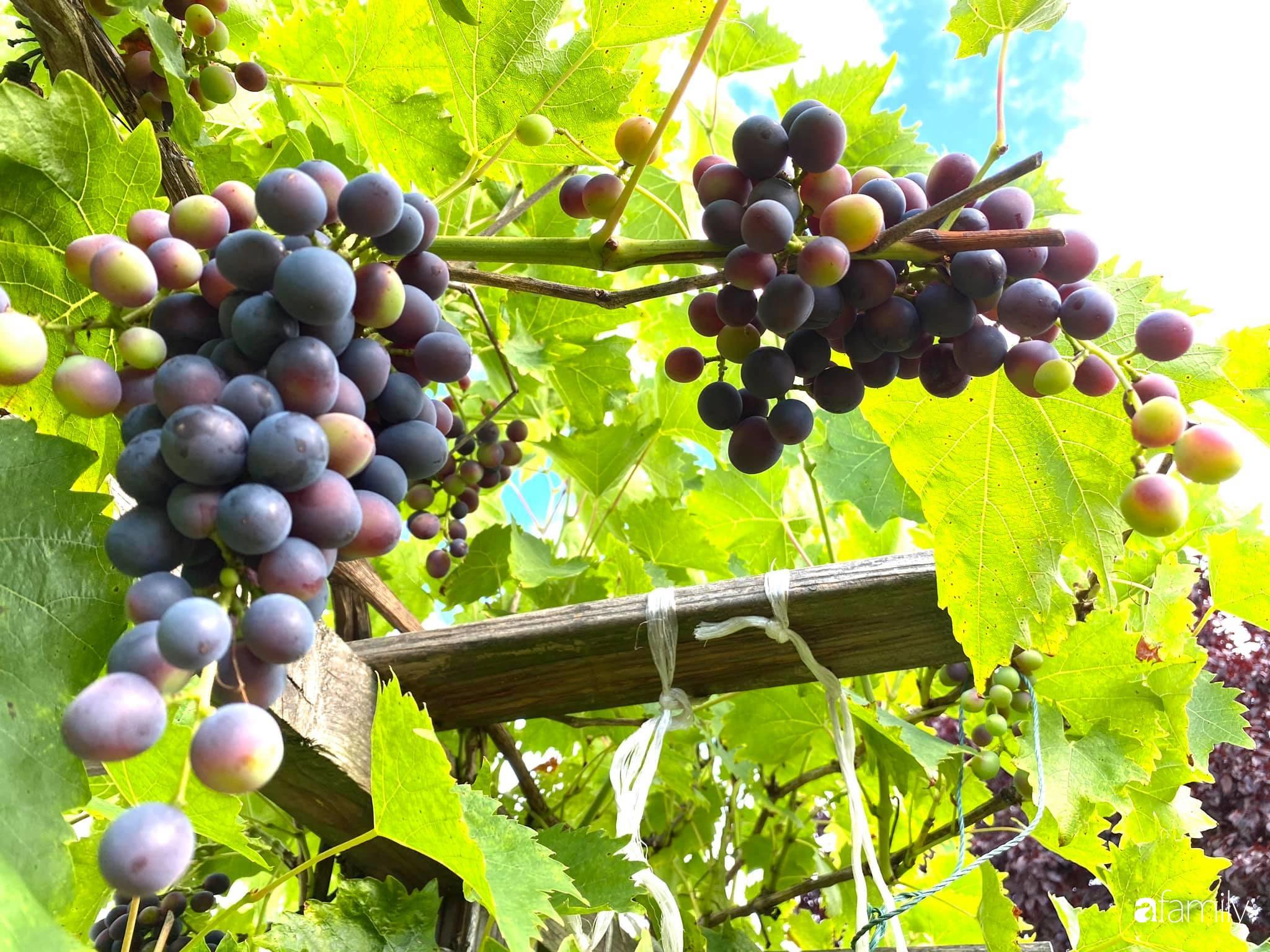 Khu vườn 200m² quanh năm xanh tươi với đủ loại rau quả sạch của mẹ Việt ở Đức - Ảnh 11.