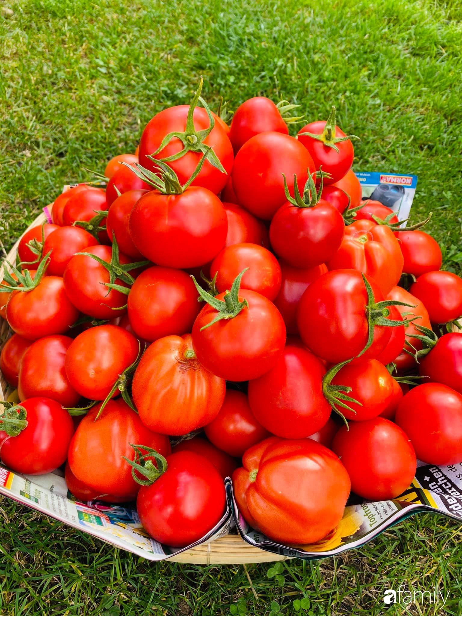 Khu vườn 200m² quanh năm xanh tươi với đủ loại rau quả sạch của mẹ Việt ở Đức - Ảnh 15.
