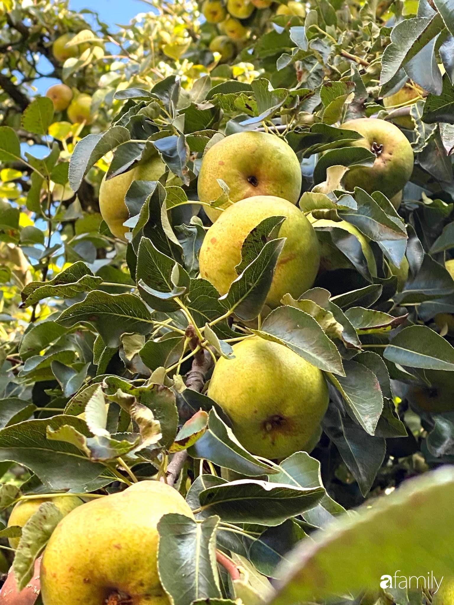 Khu vườn 200m² quanh năm xanh tươi với đủ loại rau quả sạch của mẹ Việt ở Đức - Ảnh 8.