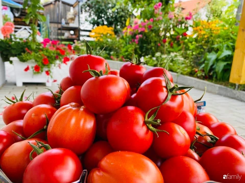 Khu vườn 200m² quanh năm xanh tươi với đủ loại rau quả sạch của mẹ Việt ở Đức - Ảnh 14.