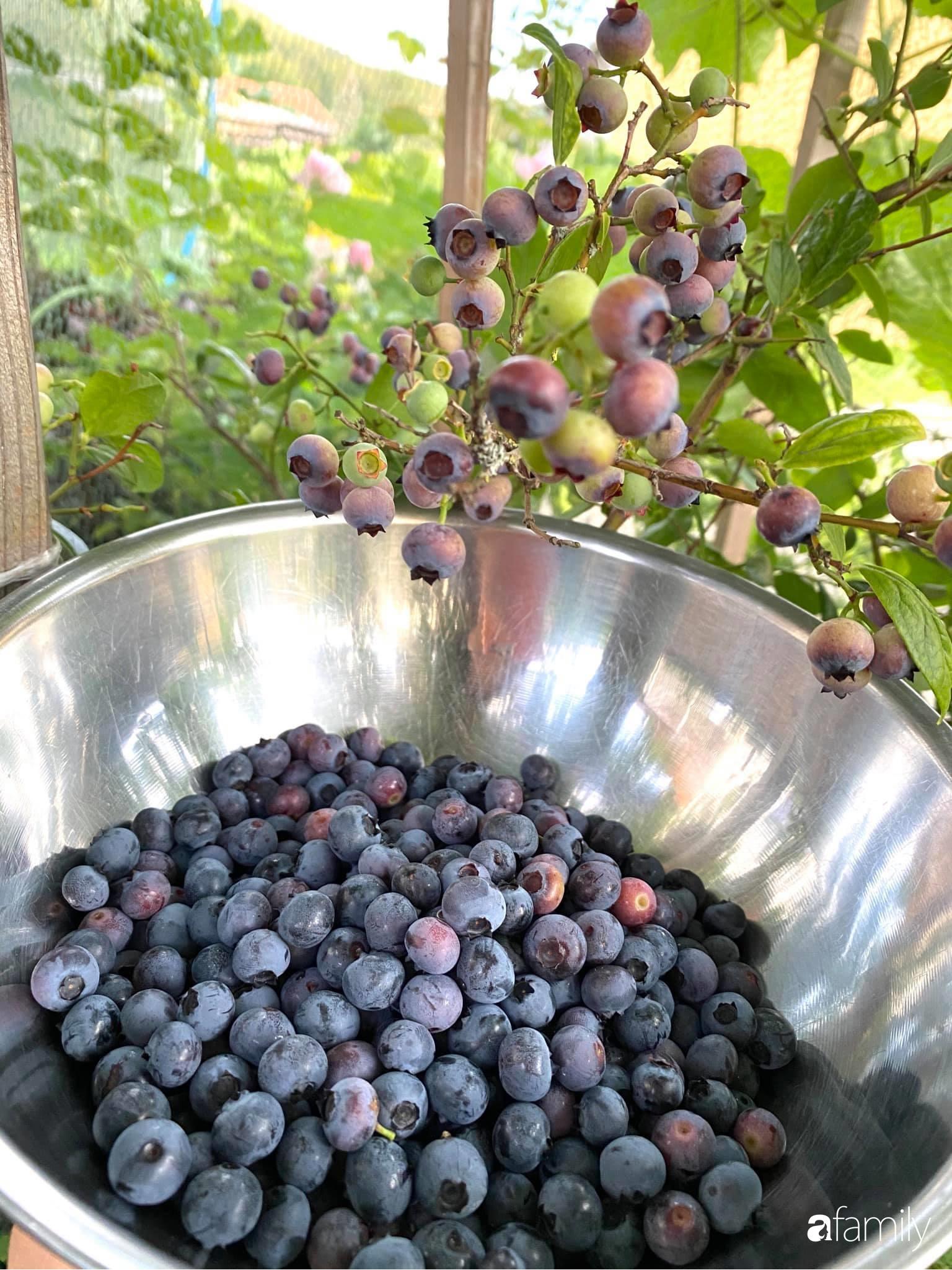 Khu vườn 200m² quanh năm xanh tươi với đủ loại rau quả sạch của mẹ Việt ở Đức - Ảnh 9.