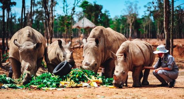 """Gặp gỡ những tê giác con """"quốc tịch Việt"""" ở Vinpearl Safari - Ảnh 1."""