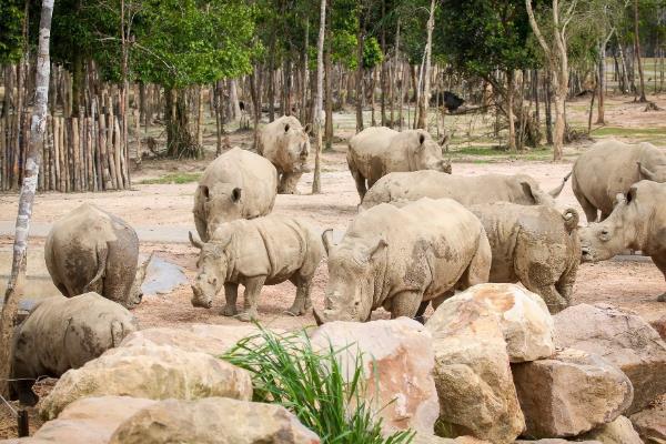 """Gặp gỡ những tê giác con """"quốc tịch Việt"""" ở Vinpearl Safari - Ảnh 4."""