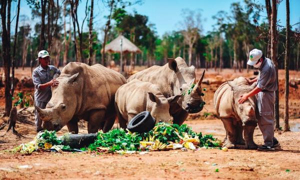 """Gặp gỡ những tê giác con """"quốc tịch Việt"""" ở Vinpearl Safari - Ảnh 5."""