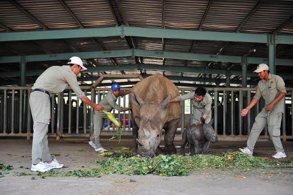 """Gặp gỡ những tê giác con """"quốc tịch Việt"""" ở Vinpearl Safari - Ảnh 6."""
