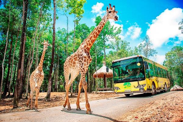 """Gặp gỡ những tê giác con """"quốc tịch Việt"""" ở Vinpearl Safari - Ảnh 7."""