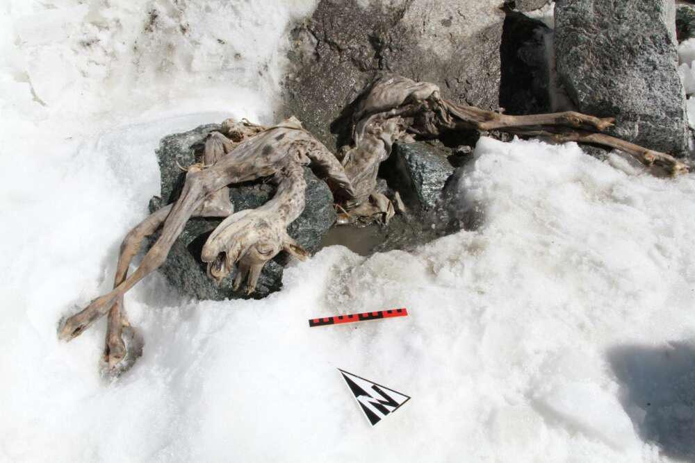 """Sinh vật sảy chân dẫn đến bị """"ướp đá"""" suốt 400 năm, nay bỗng dưng trở thành """"anh hùng cứu tinh"""" cho vô số xác ướp đông lạnh ngày nay - Ảnh 3."""