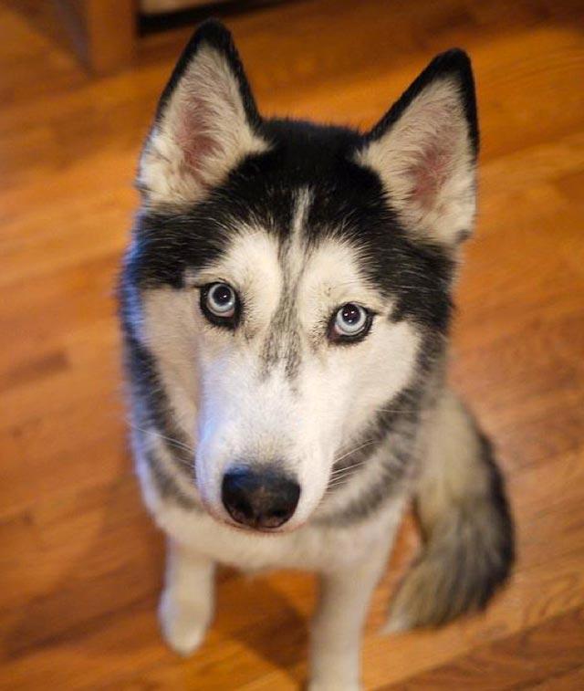 """Hãy tưởng tượng đến một ngày con chó """"ngáo"""" nhà bạn biết nói tiếng người, nó sẽ thổ lộ những gì? - Ảnh 10."""