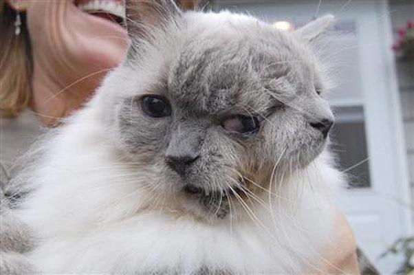 """Chú mèo 2 đầu trông như photoshop nhưng khiến nhân loại há hốc với khả năng sống sót và loạt sự vụ có thật nhưng ai cũng nghĩ là đồ """"pha ke"""" - Ảnh 1."""