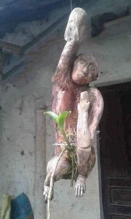 """Chán đào, quất ngày Tết, dân mạng """"đổi gió"""" sang chơi loạt cây bonsai chất lừ: Củ cải khổng lồ nở hoa tím biếc, táo lùn """"pha-ke"""" chi chít quả đỏ - Ảnh 13."""