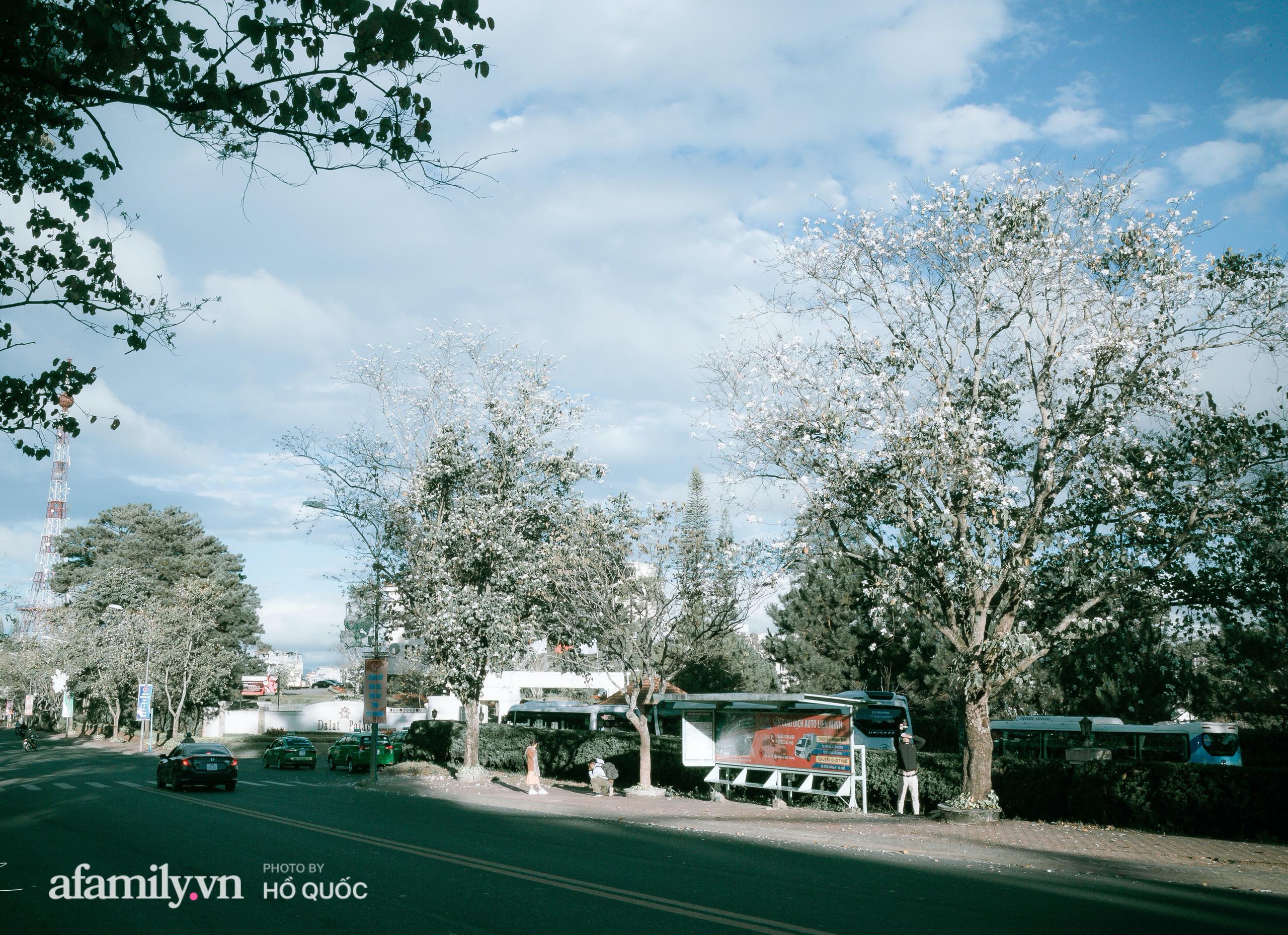 """Hoa ban trắng nở rộ, trời Đà Lạt như """"cô gái Tây Bắc e thẹn"""" báo hiệu một mùa xuân mới đến trong lành  - Ảnh 8."""