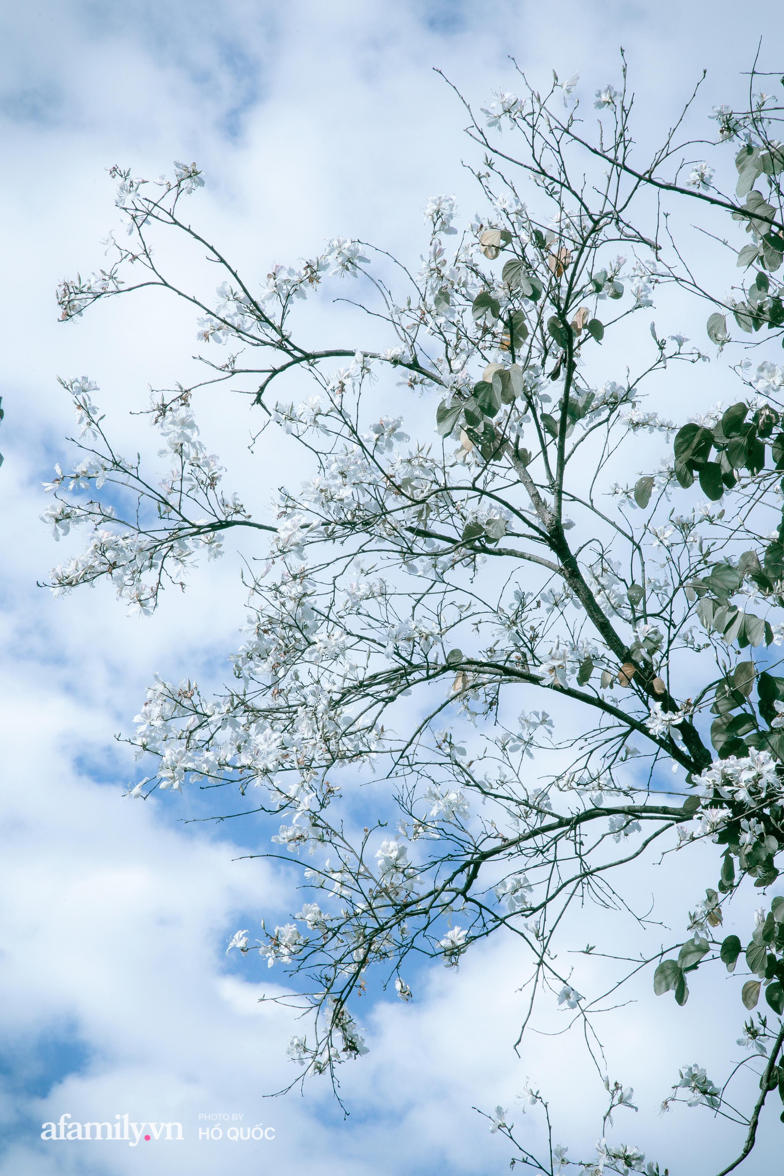 """Hoa ban trắng nở rộ, trời Đà Lạt như """"cô gái Tây Bắc e thẹn"""" báo hiệu một mùa xuân mới đến trong lành  - Ảnh 5."""