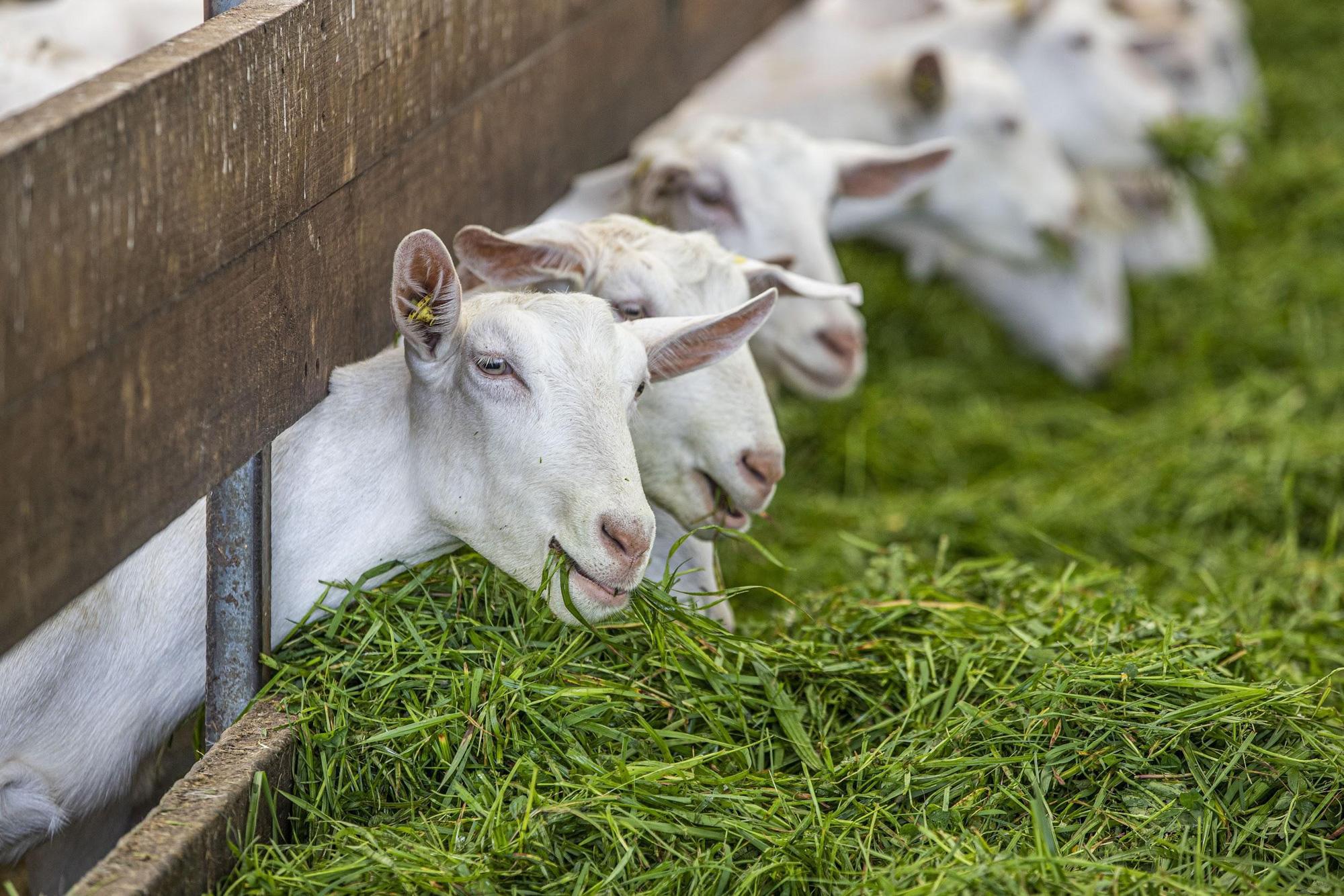 """Xuất hiện sản phẩm dinh dưỡng cao cấp đến từ New Zealand với quy trình sản xuất """"từ nông trại đến cửa hàng"""" được lòng mẹ Việt - Ảnh 3."""