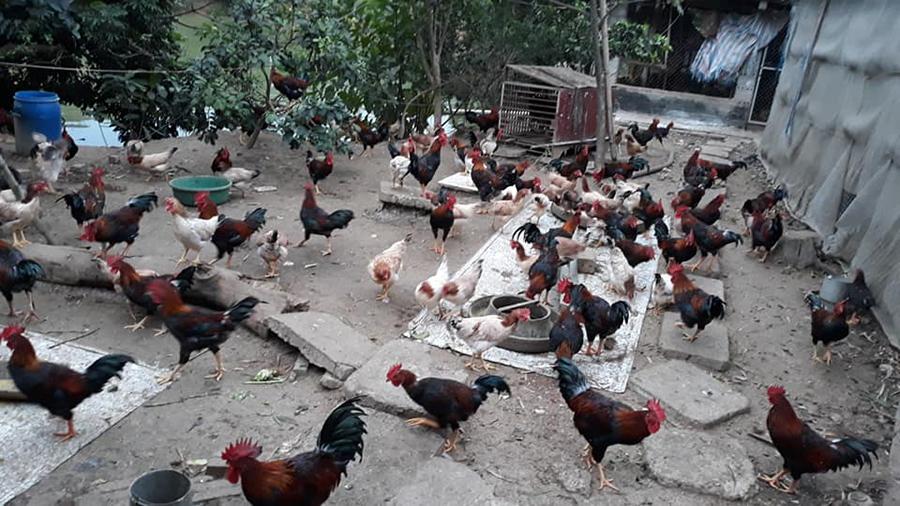 7 bí quyết chi tiêu mua thực phẩm Tết tiết kiệm, dù nhà cả huyện người cũng ăn Tết không quá 5 triệu đồng - Ảnh 1.