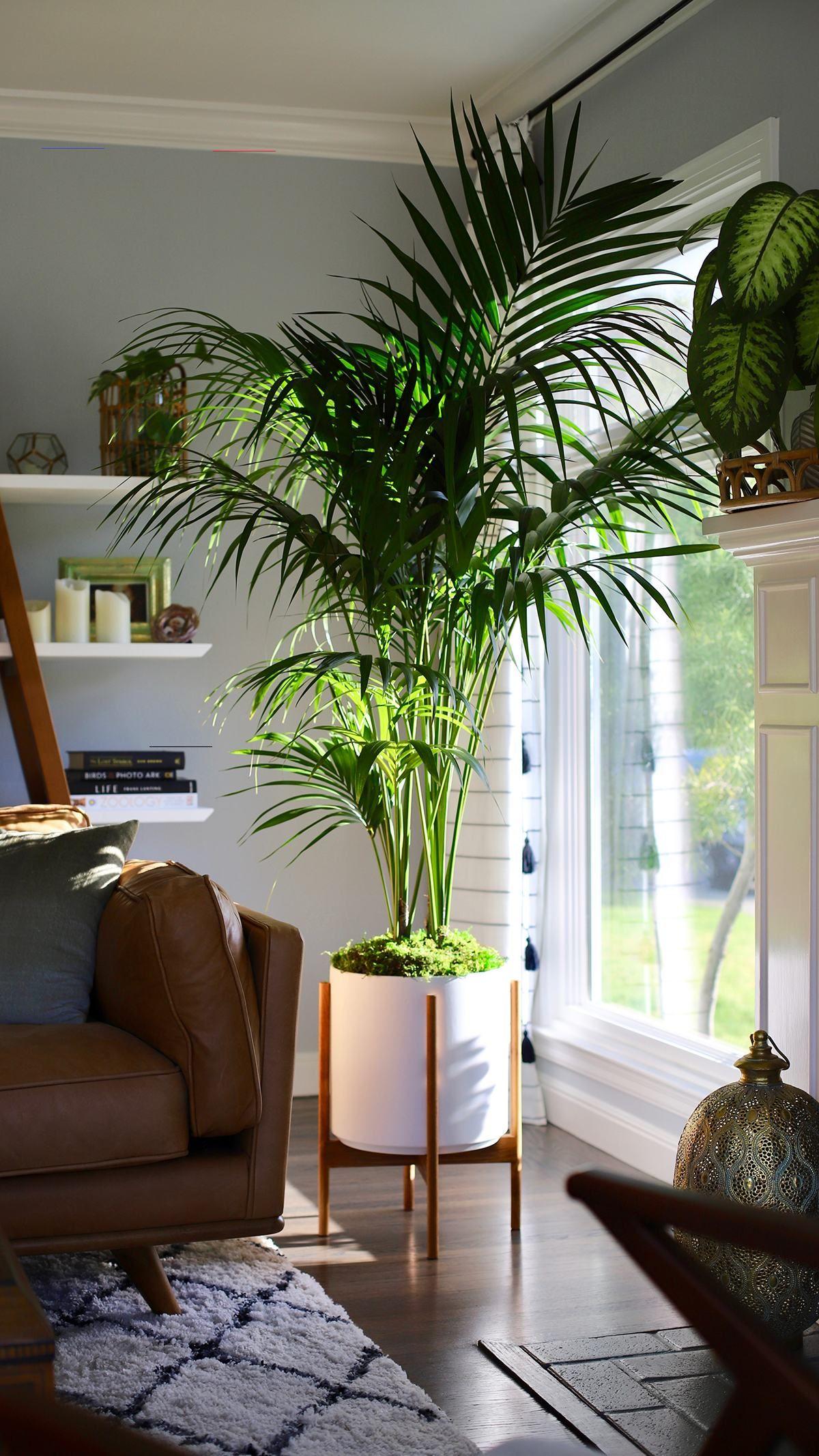 Ý tưởng điểm tô phòng khách cực xinh nhờ trang trí khung cửa sổ - Ảnh 3.