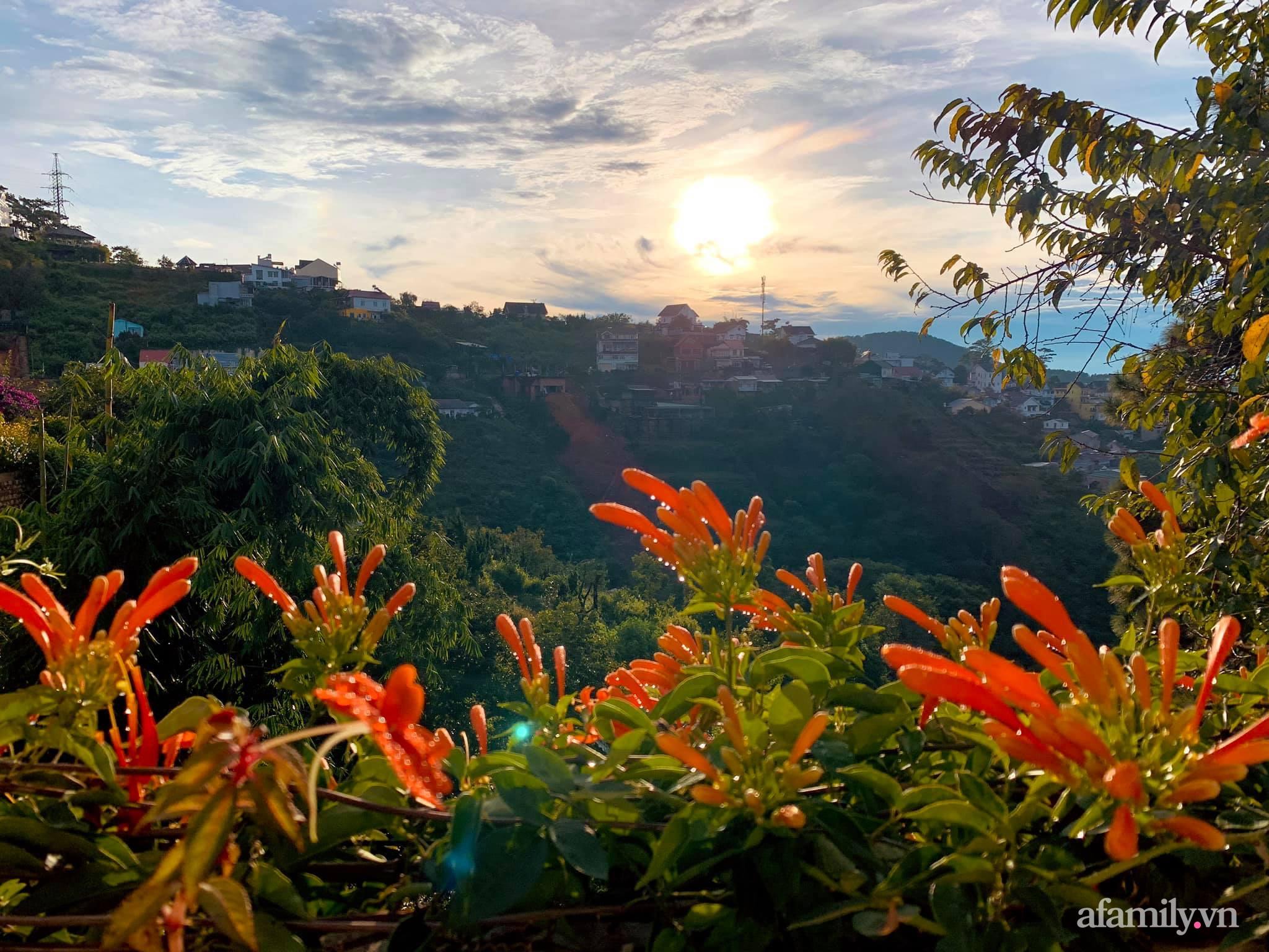 Ngôi nhà nhỏ yên bình sở hữu khu vườn đẹp như xứ sở thần tiên giữa lưng chừng đồi ở Đà Lạt - Ảnh 21.
