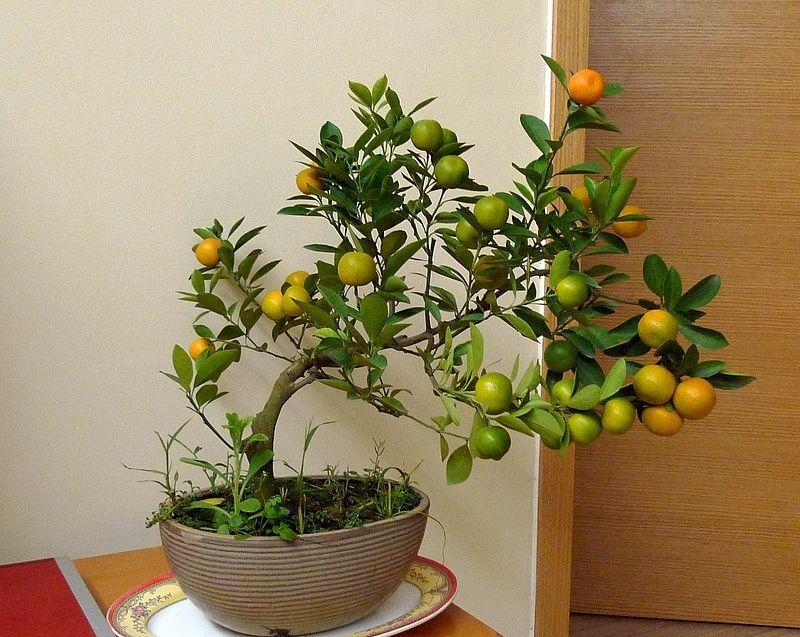 Ngày Tết nên chọn loại hoa, cây cảnh nào để đặt ở trong nhà? - Ảnh 6.