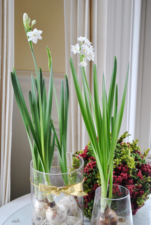 Ngày Tết nên chọn loại hoa, cây cảnh nào để đặt ở trong nhà? - Ảnh 13.