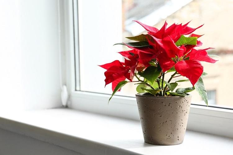 Ngày Tết nên chọn loại hoa, cây cảnh nào để đặt ở trong nhà? - Ảnh 11.
