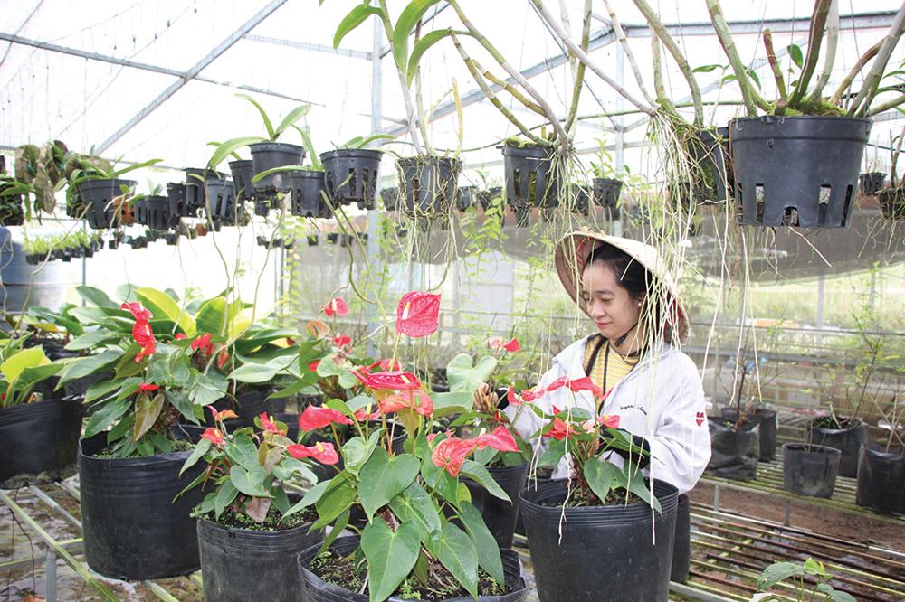 5 điều bạn cần phải biết để không bị lỗ vốn khi bán hoa ngày Tết - Ảnh 3.