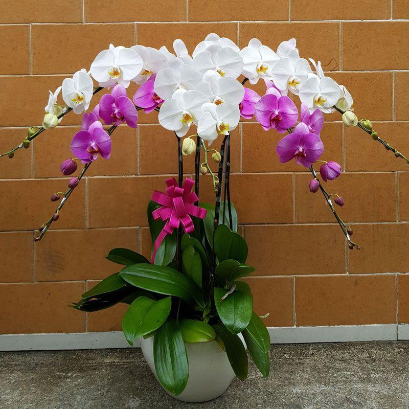 Ngày Tết nên chọn loại hoa, cây cảnh nào để đặt ở trong nhà? - Ảnh 9.