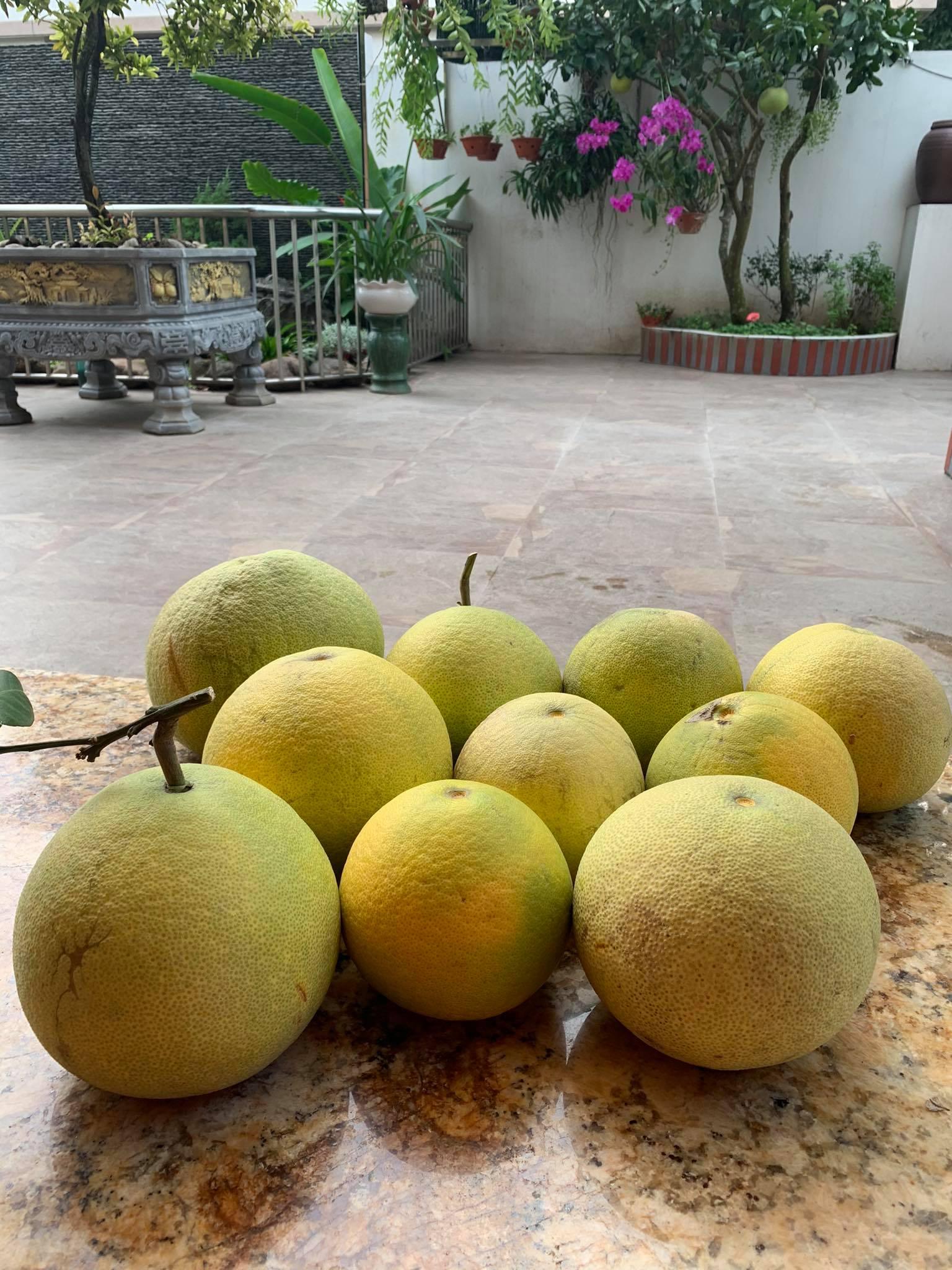 Ngôi nhà quanh năm rực rỡ sắc hương hoa hồng và đủ loại cây ăn quả ở Hà Nội - Ảnh 5.