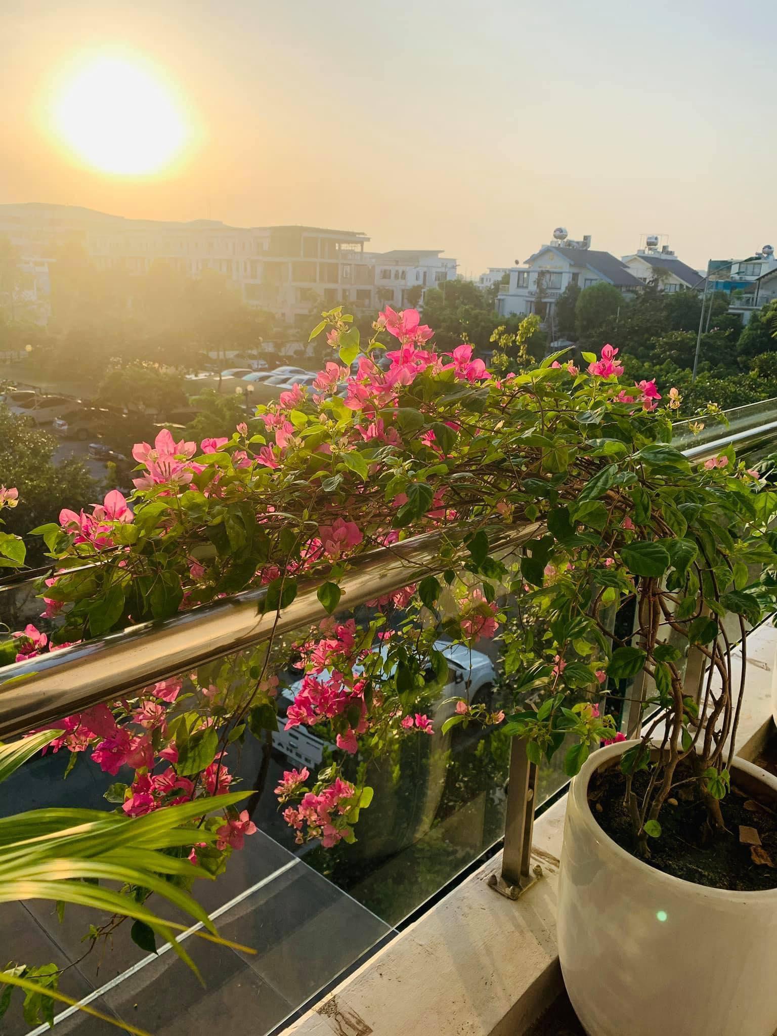 Ngôi nhà quanh năm rực rỡ sắc hương hoa hồng và đủ loại cây ăn quả ở Hà Nội - Ảnh 16.