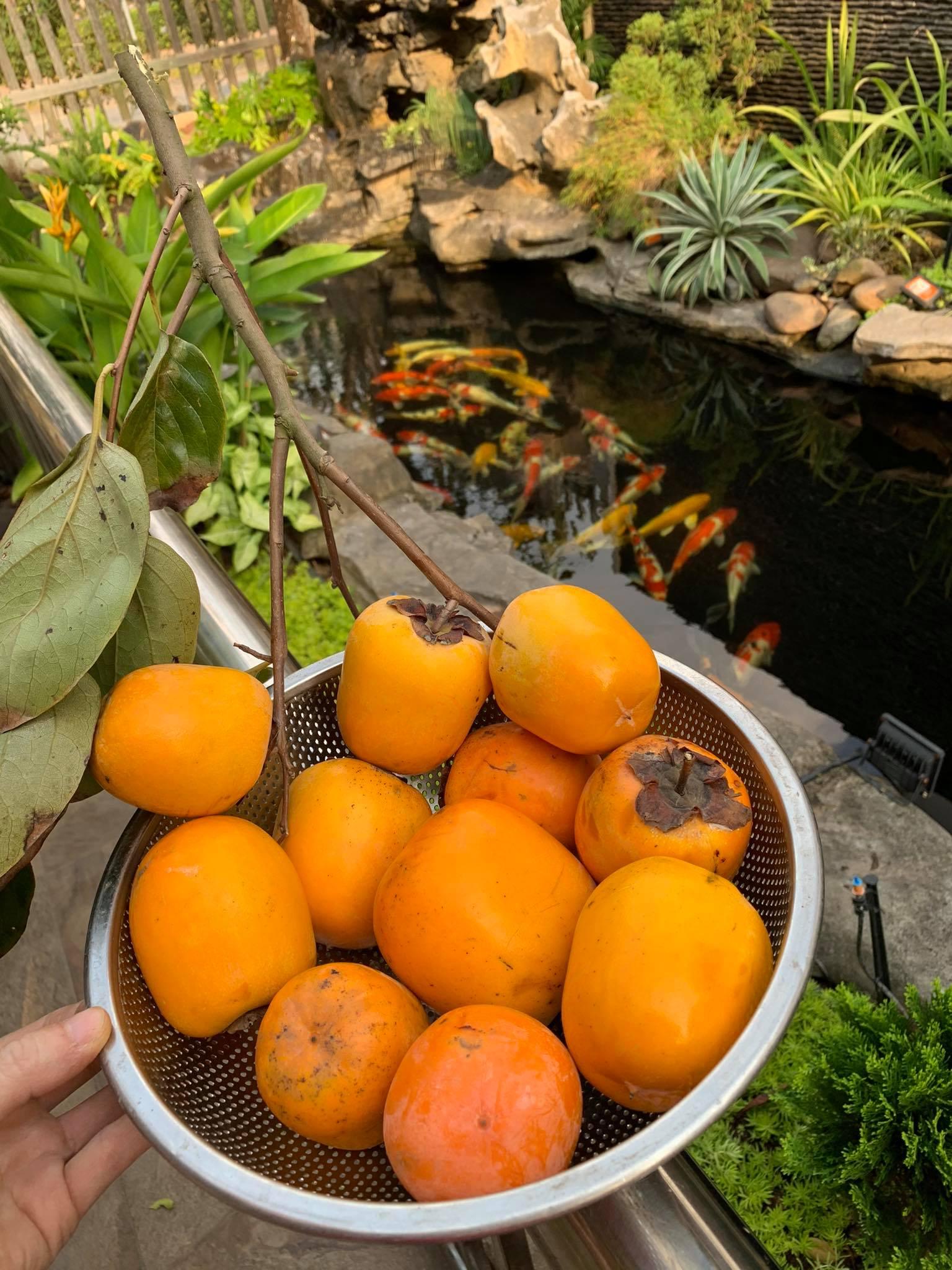 Ngôi nhà quanh năm rực rỡ sắc hương hoa hồng và đủ loại cây ăn quả ở Hà Nội - Ảnh 6.