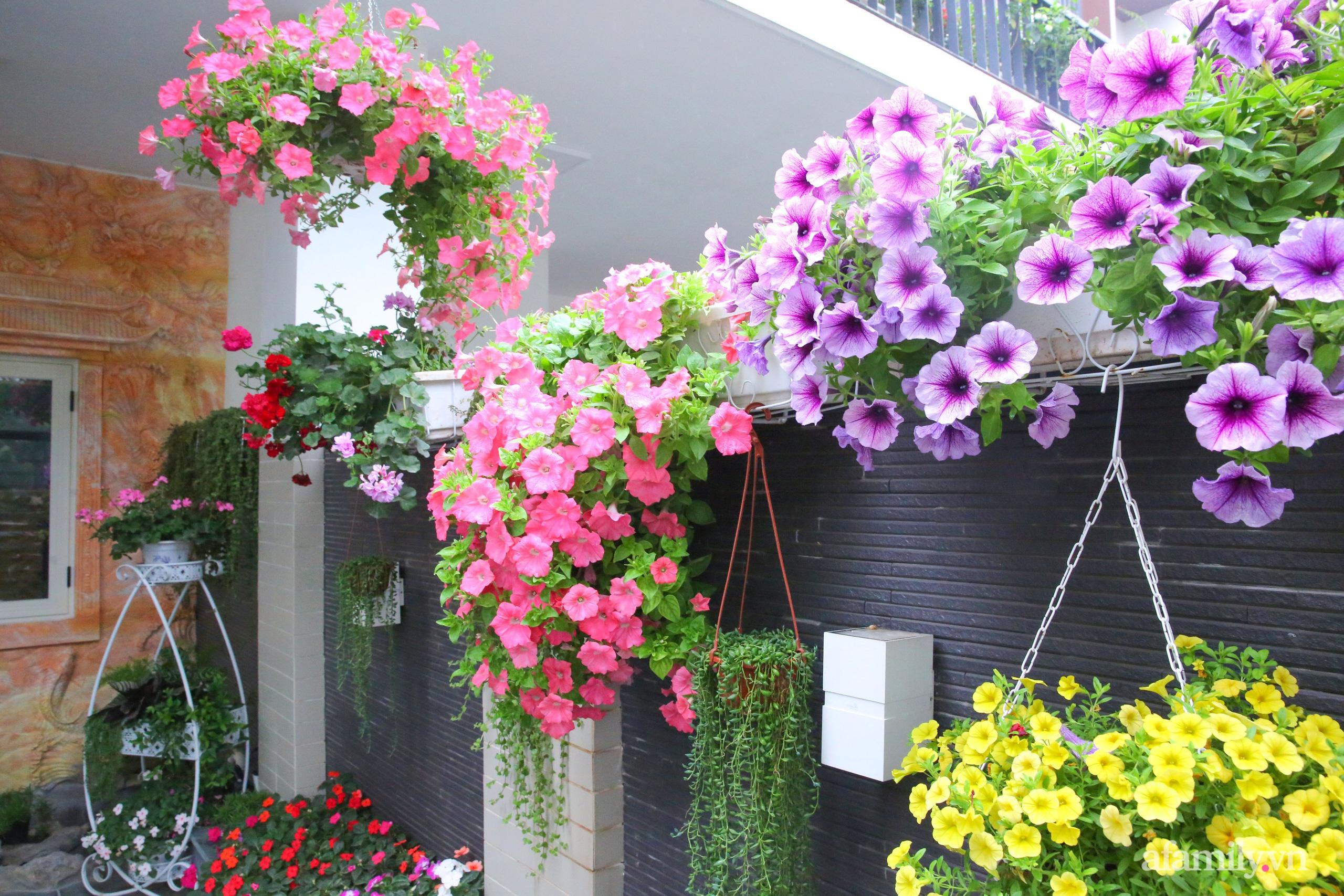 Kinh nghiệm trồng dạ yến thảo nở rực rỡ đủ sắc màu phủ kín mặt tiền nhà phố Hà Nội - Ảnh 5.