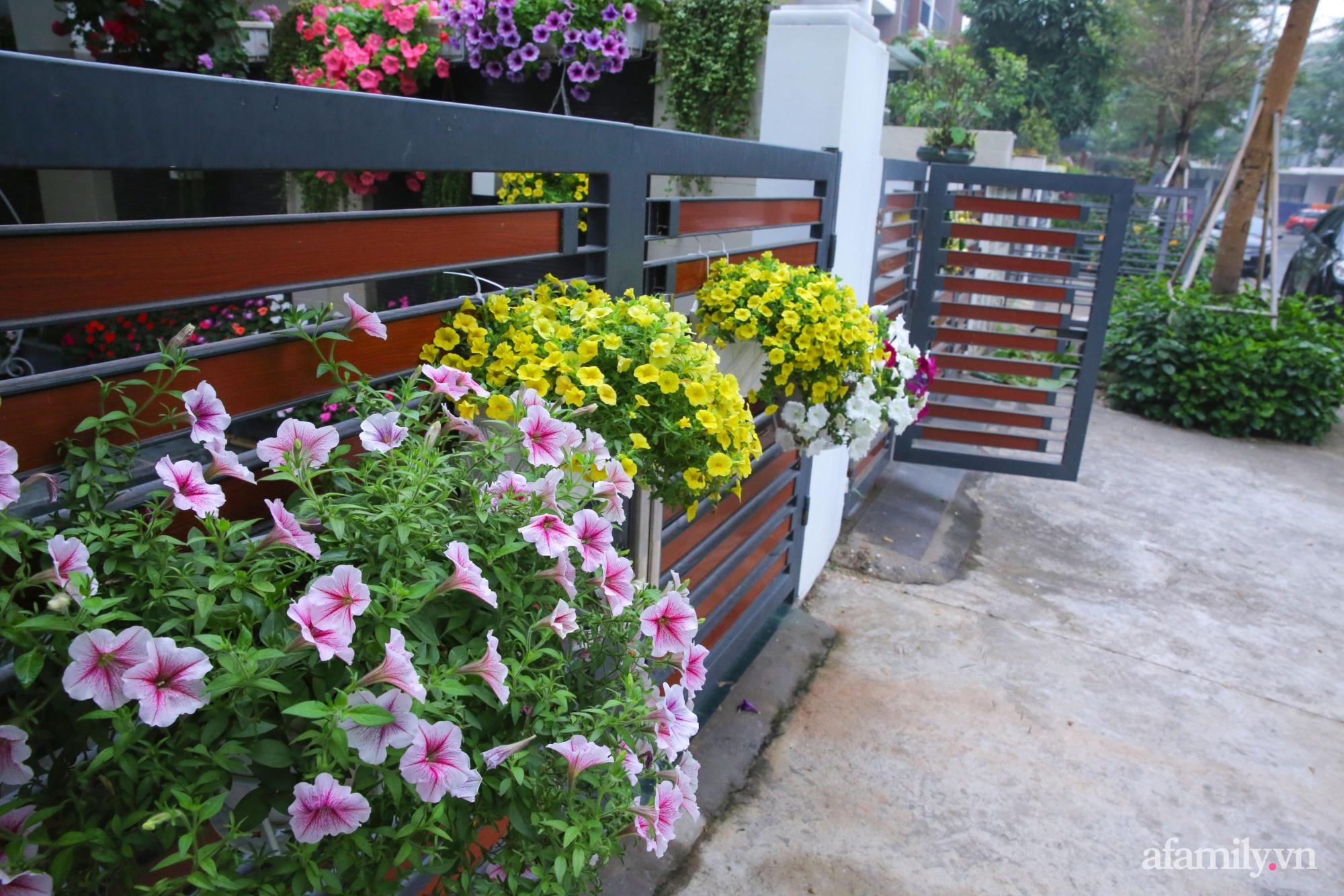 Kinh nghiệm trồng dạ yến thảo nở rực rỡ đủ sắc màu phủ kín mặt tiền nhà phố Hà Nội - Ảnh 12.