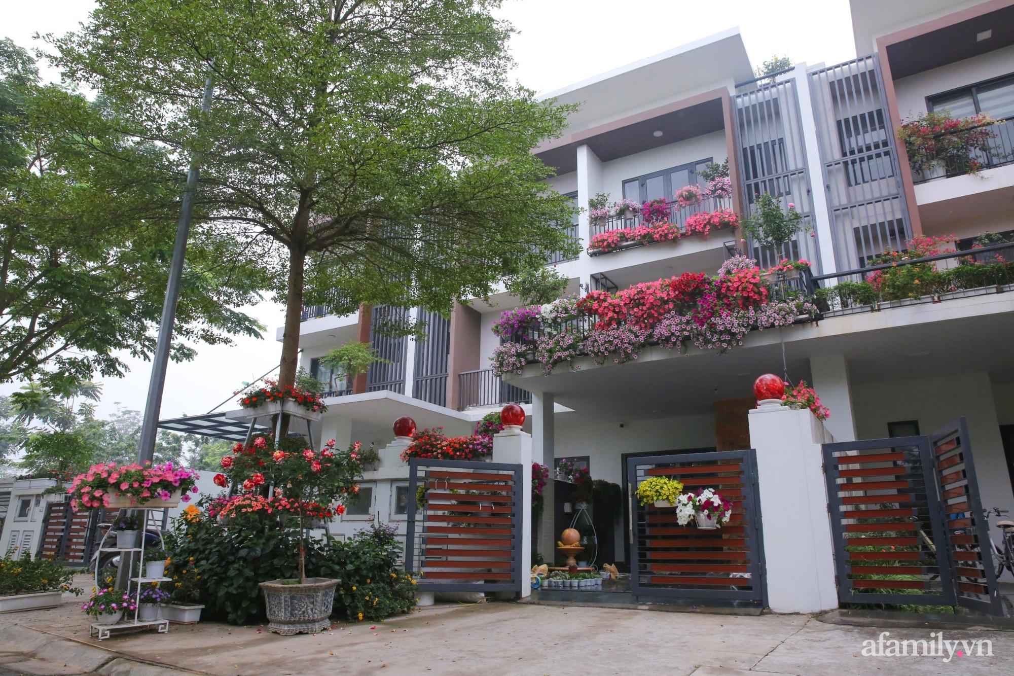 Kinh nghiệm trồng dạ yến thảo nở rực rỡ đủ sắc màu phủ kín mặt tiền nhà phố Hà Nội - Ảnh 1.
