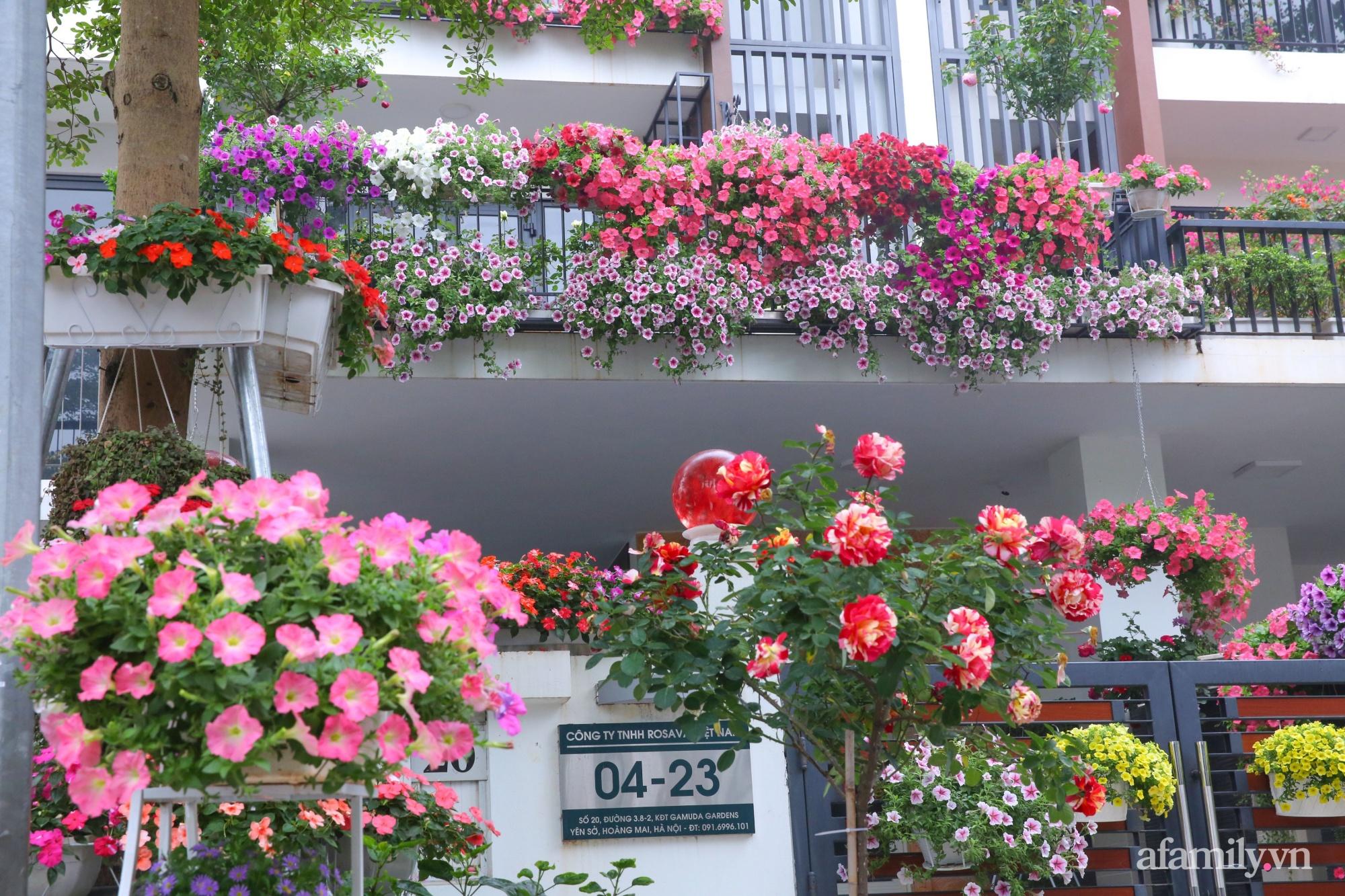 Kinh nghiệm trồng dạ yến thảo nở rực rỡ đủ sắc màu phủ kín mặt tiền nhà phố Hà Nội - Ảnh 9.