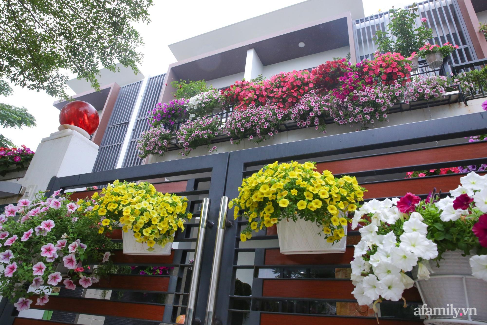 Kinh nghiệm trồng dạ yến thảo nở rực rỡ đủ sắc màu phủ kín mặt tiền nhà phố Hà Nội - Ảnh 2.