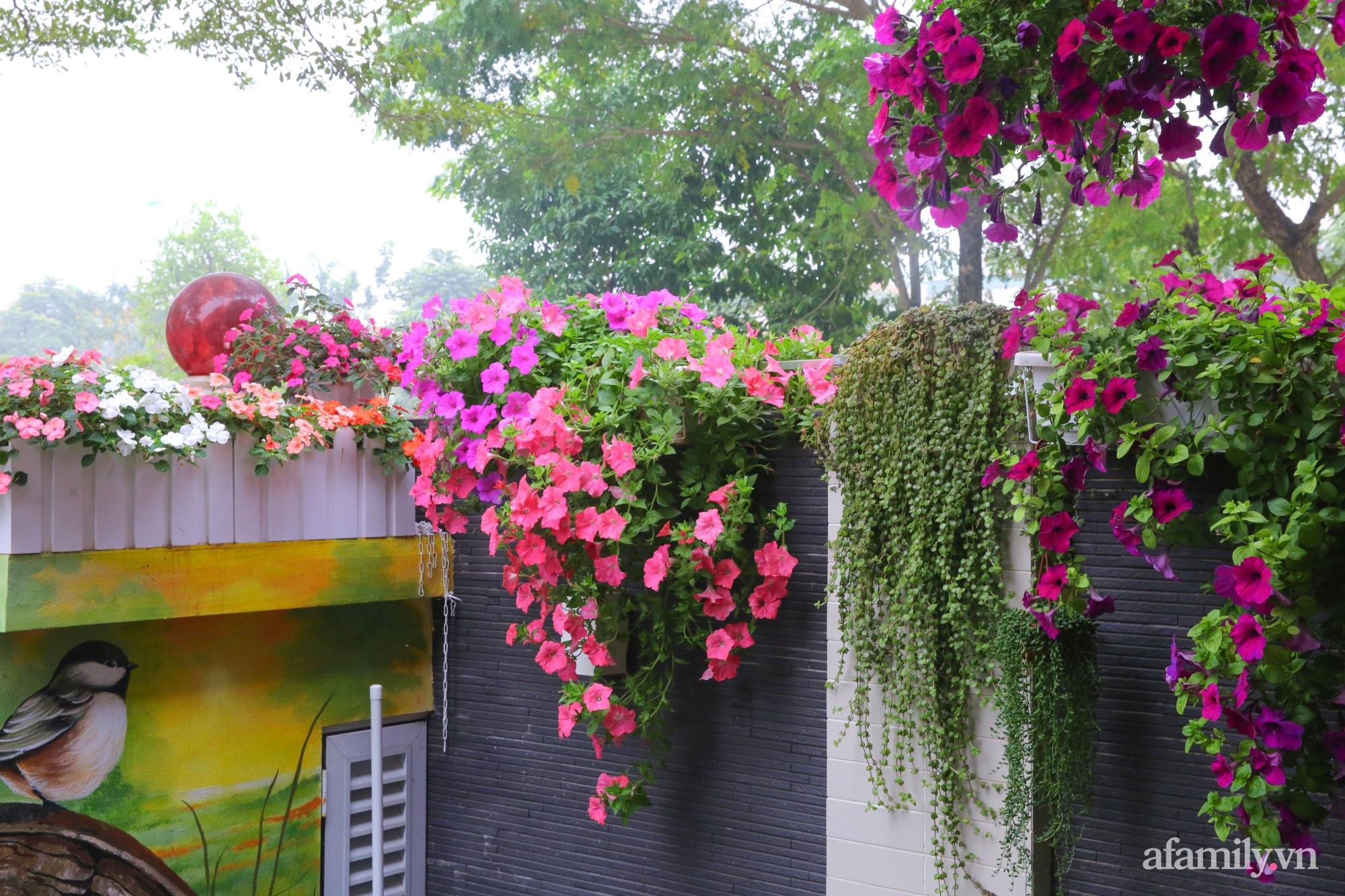 Kinh nghiệm trồng dạ yến thảo nở rực rỡ đủ sắc màu phủ kín mặt tiền nhà phố Hà Nội - Ảnh 7.