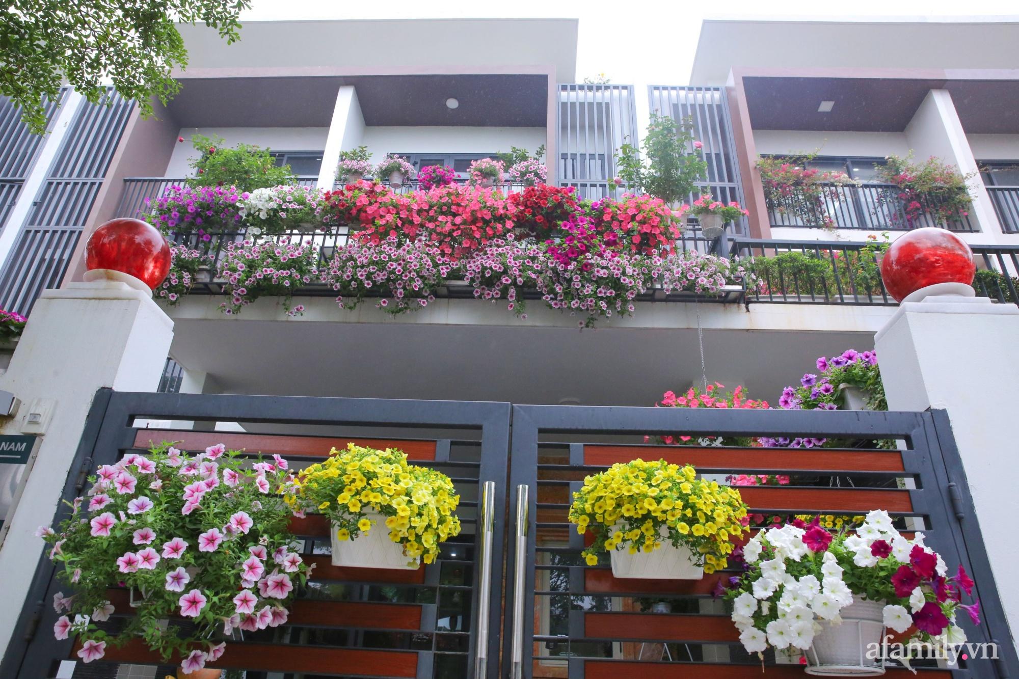 Kinh nghiệm trồng dạ yến thảo nở rực rỡ đủ sắc màu phủ kín mặt tiền nhà phố Hà Nội - Ảnh 11.