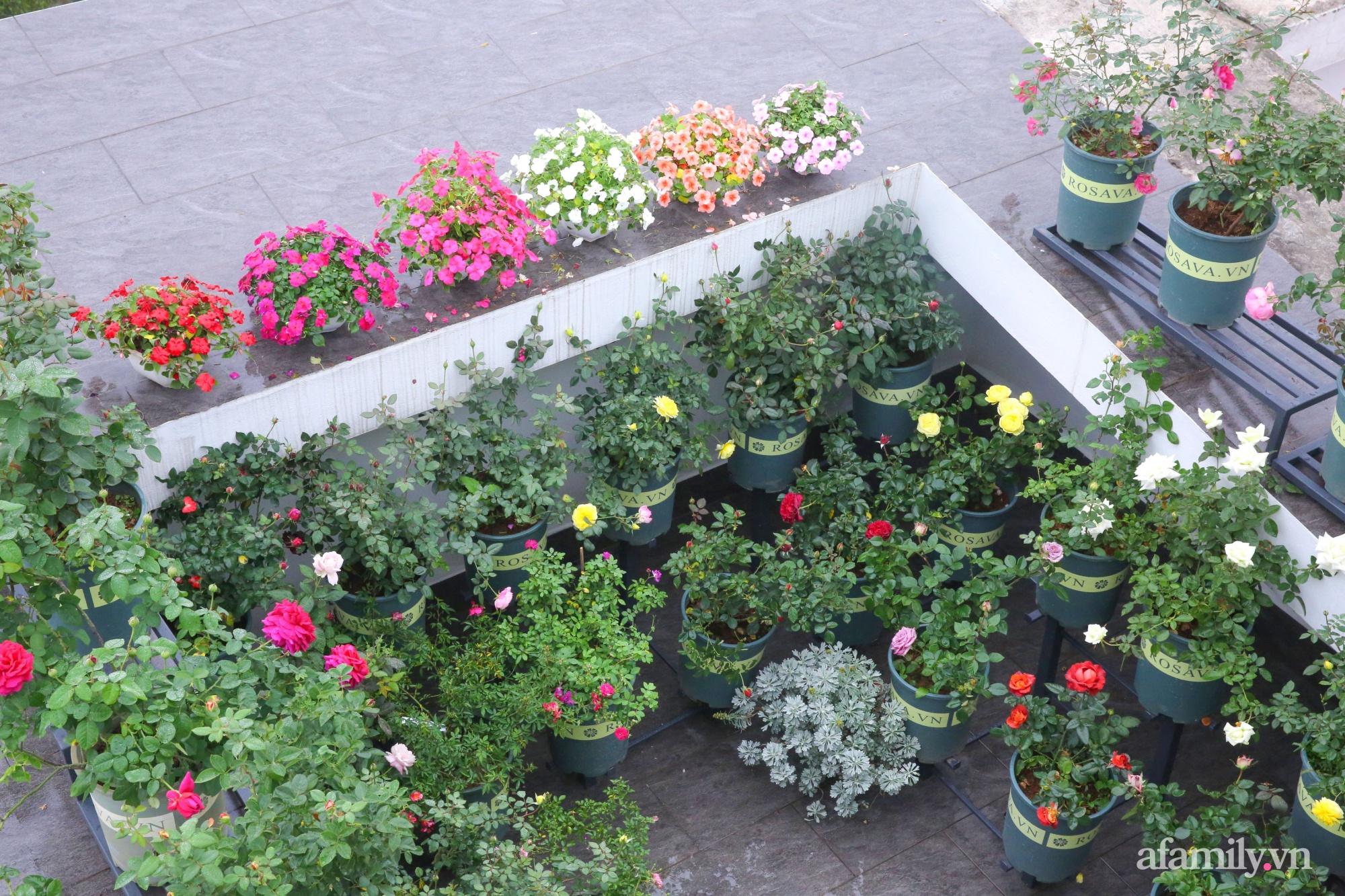 Kinh nghiệm trồng dạ yến thảo nở rực rỡ đủ sắc màu phủ kín mặt tiền nhà phố Hà Nội - Ảnh 13.
