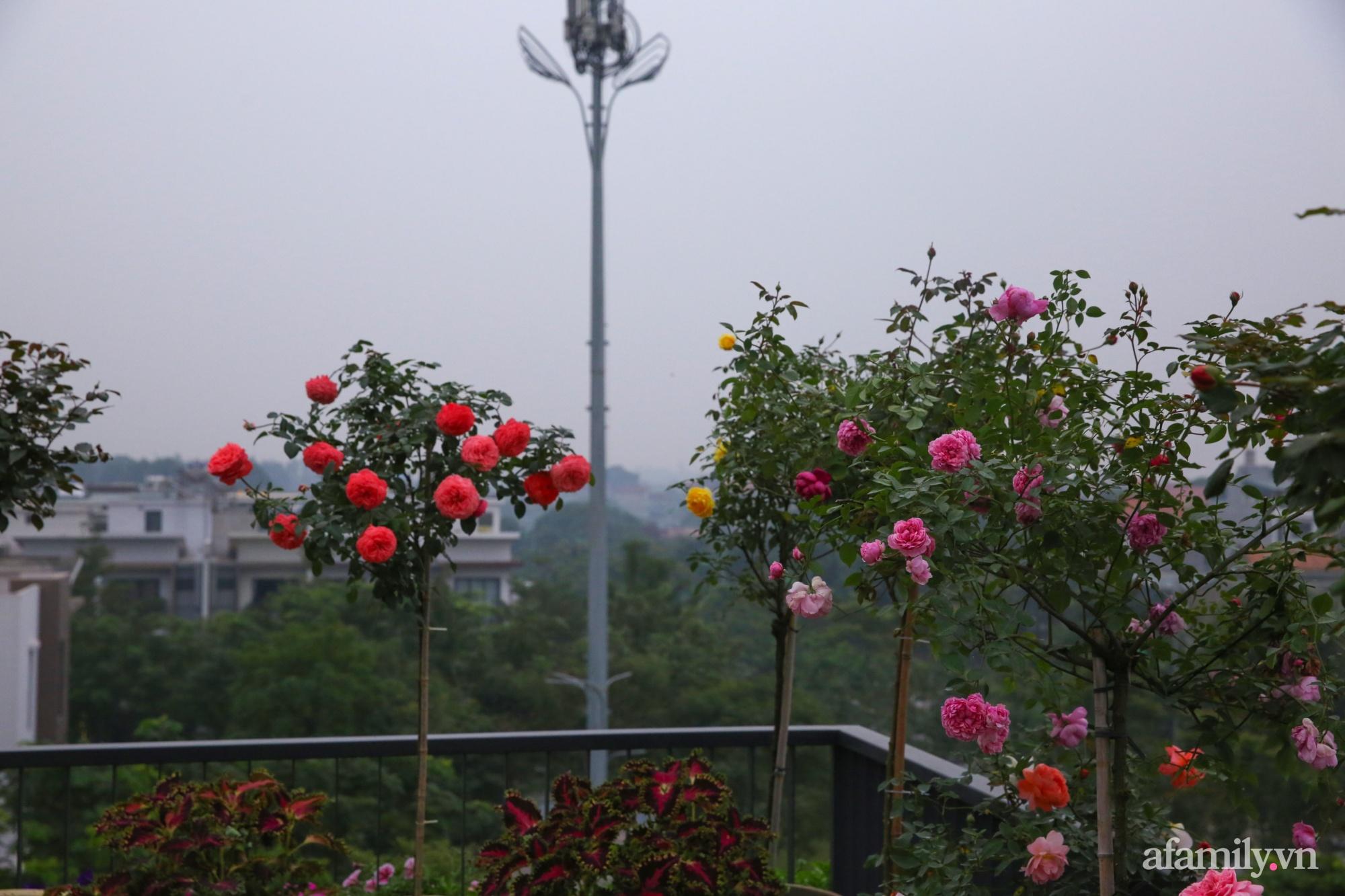 Kinh nghiệm trồng dạ yến thảo nở rực rỡ đủ sắc màu phủ kín mặt tiền nhà phố Hà Nội - Ảnh 16.