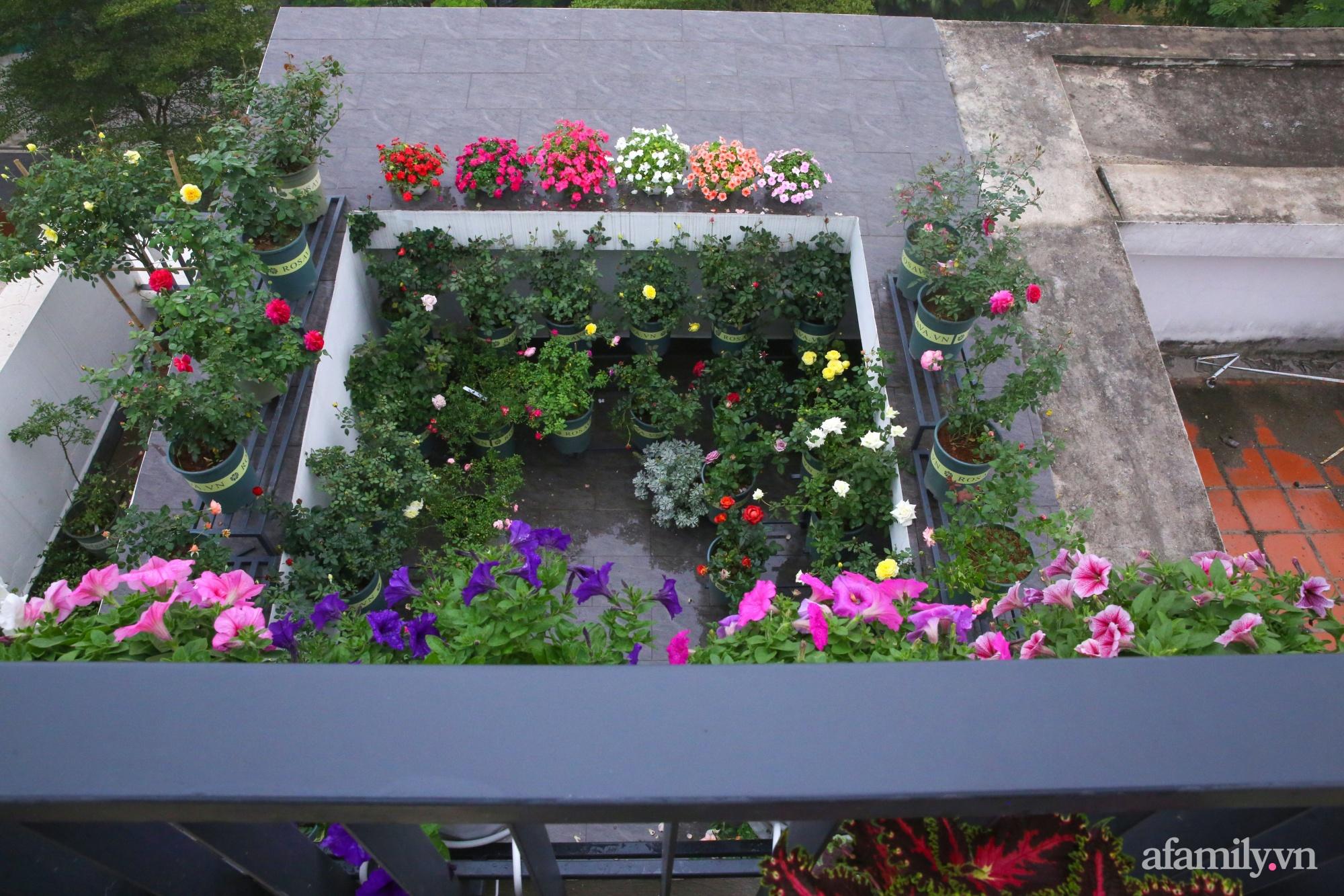 Kinh nghiệm trồng dạ yến thảo nở rực rỡ đủ sắc màu phủ kín mặt tiền nhà phố Hà Nội - Ảnh 10.