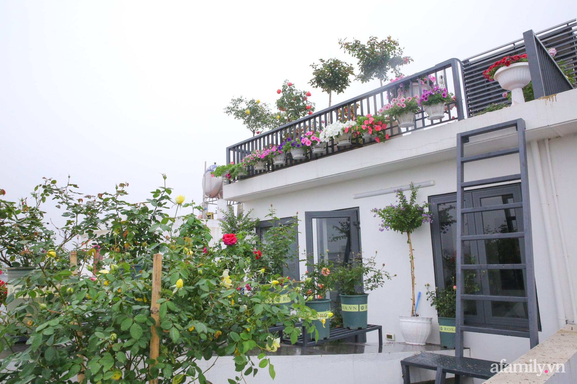 Kinh nghiệm trồng dạ yến thảo nở rực rỡ đủ sắc màu phủ kín mặt tiền nhà phố Hà Nội - Ảnh 14.