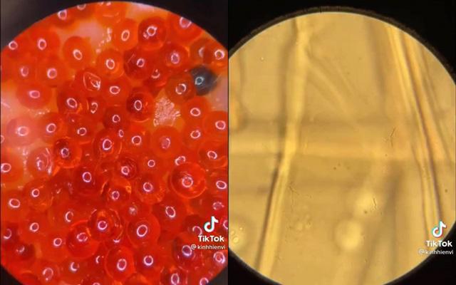 Xem clip soi trứng cá hồi sống dưới kính hiển vi, thứ hiện ra khiến ai nấy đều bất ngờ