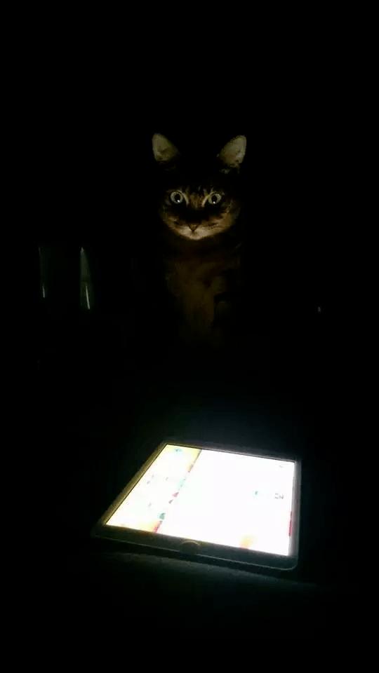 """Thức dậy bỗng dưng thấy cả người đau nhức, cô gái vội kiểm tra camera mới ngỡ ngàng nhận ra mình bị mèo cưng """"trừng phạt"""" cả đêm - Ảnh 9."""